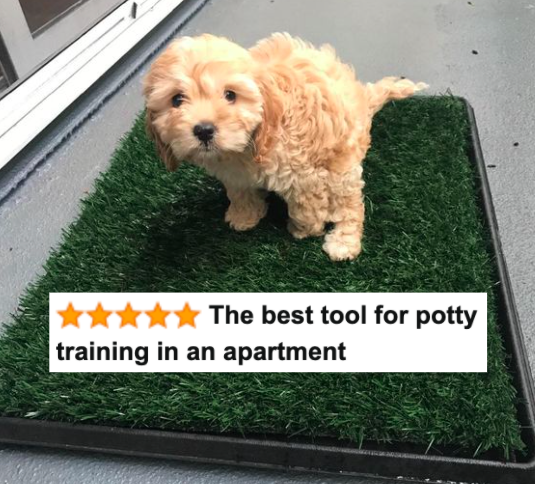 """Reviewer's puppy sitting on the grass mat with five-star caption that says """"the best tool for potty training in an apartment"""""""