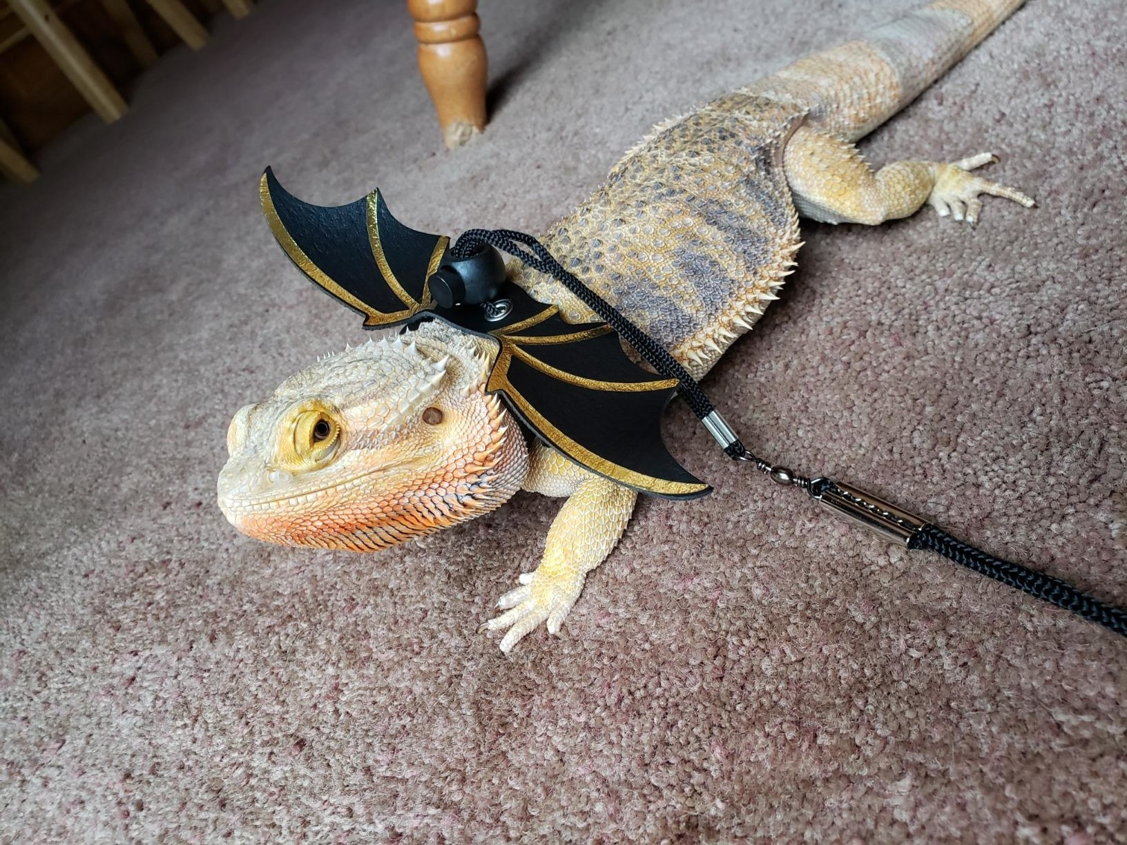 Reviewer's photo of their lizard wearing the leash