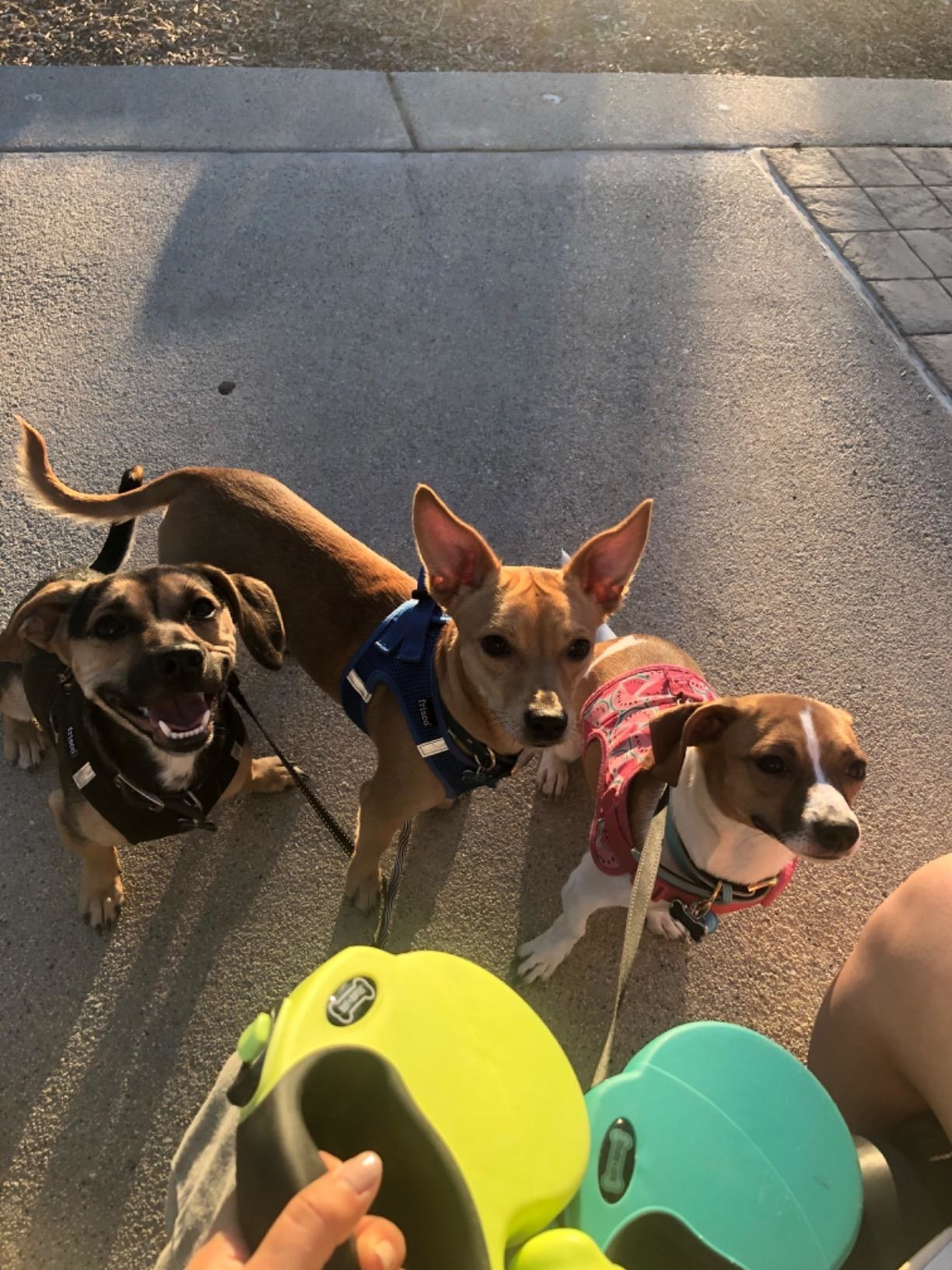 Reviewer's photo of three dogs on two of the leashes in the colors Green and Aqua