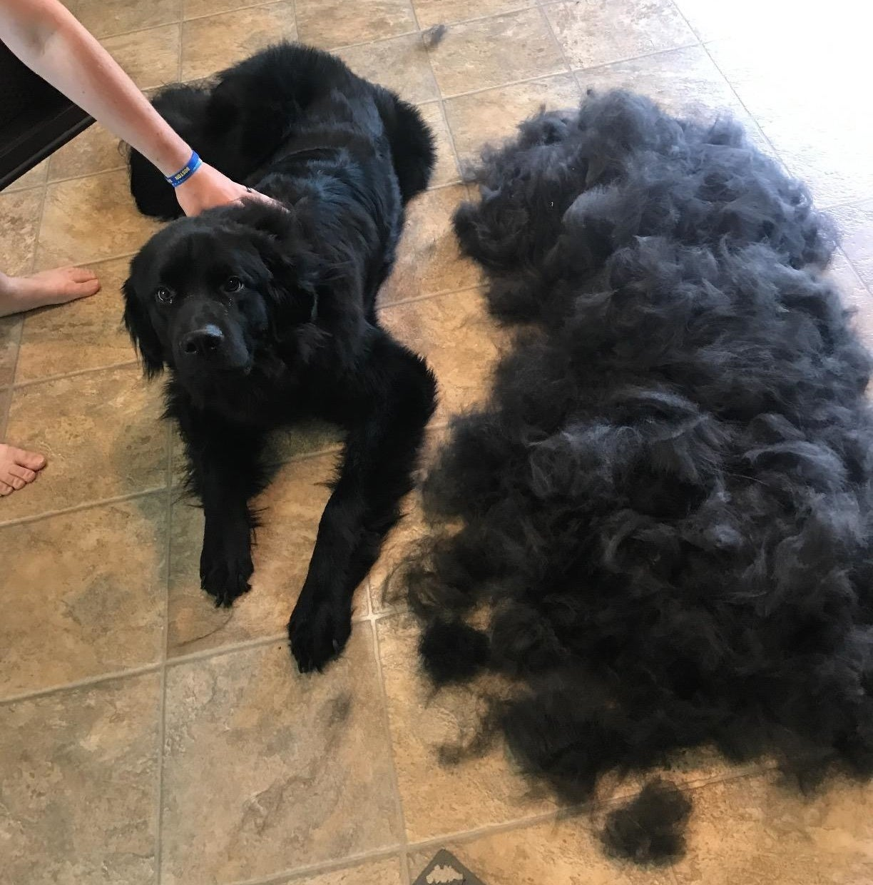 Reviewer's photo of their dog and a pile of discarded fur