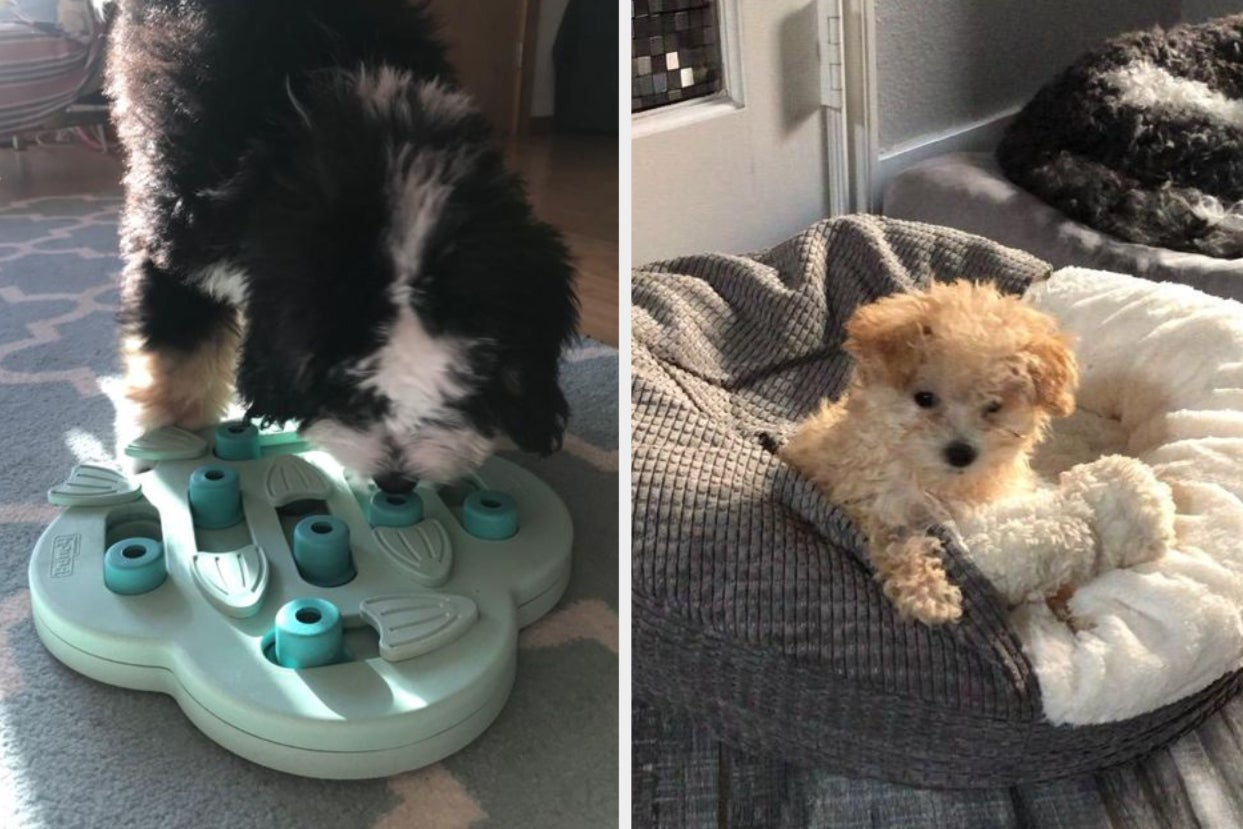 28 Products From Amazon Puppy Owners Swear By