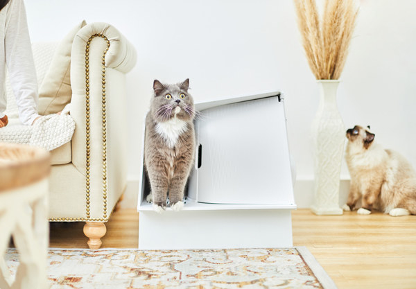 Cat exiting White Villa litter box in stylish living room.