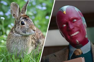 A bunny is on the left with Vision on the right tilting his head