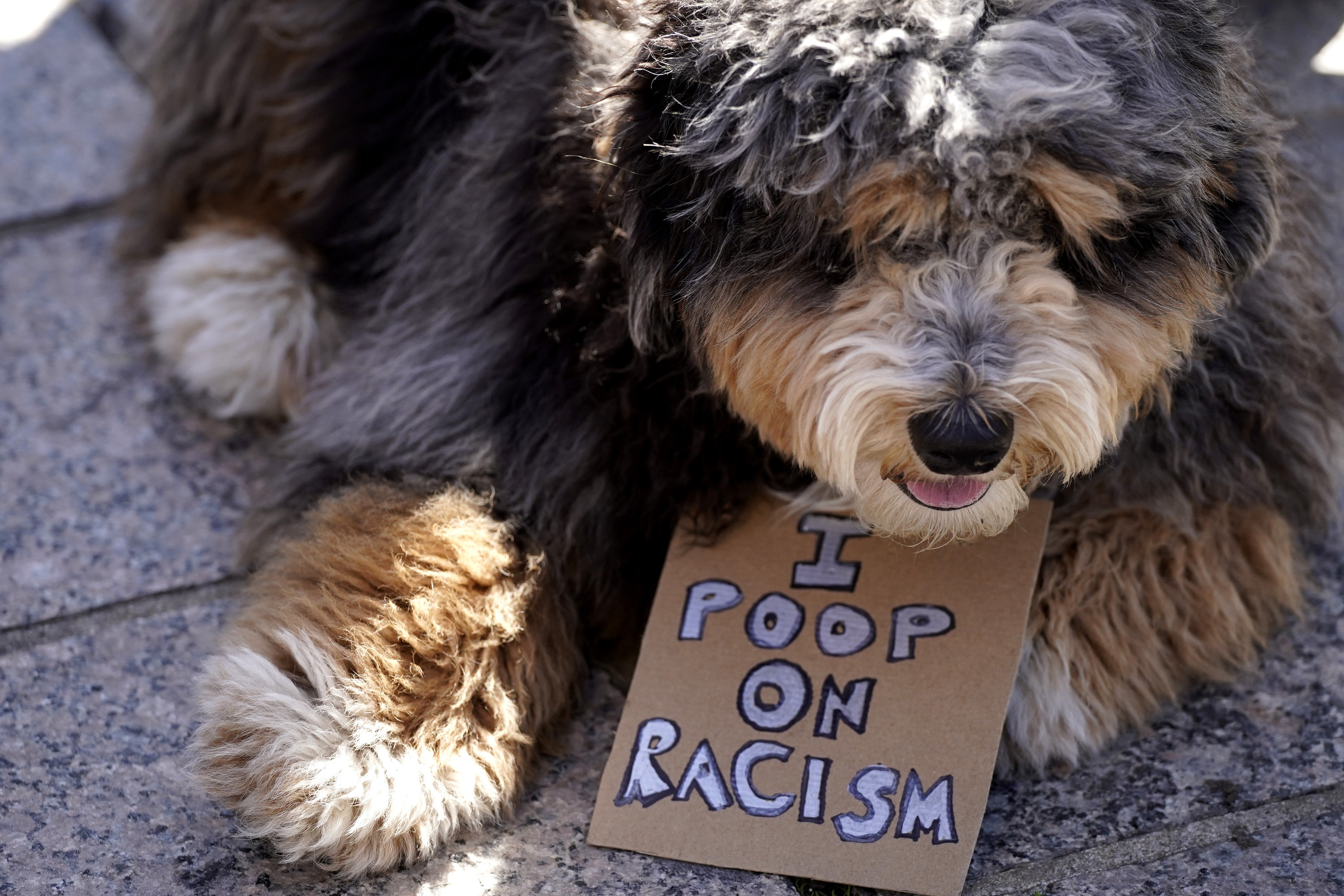 """Dog with a sign that says, """"I poop on racism"""""""