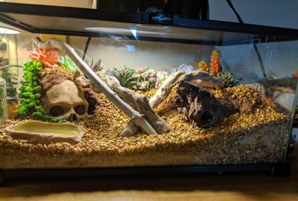 glass reptile tank with accessories in it
