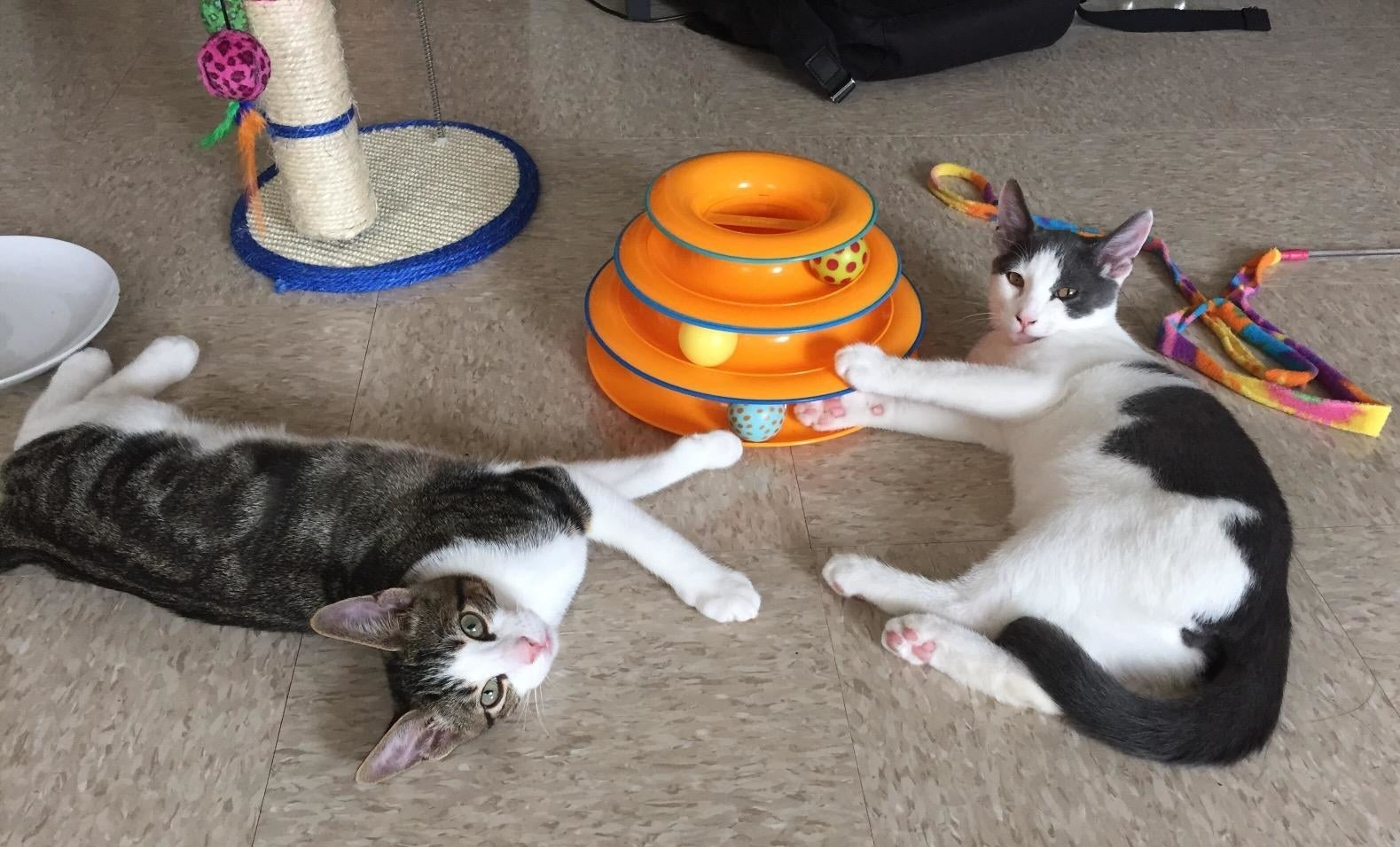 a reviewer's cats playing with the ball toy