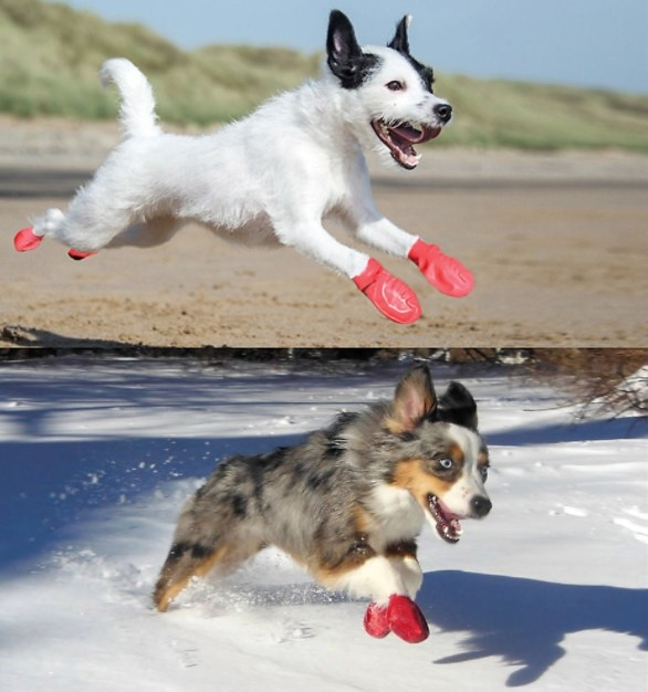 dogs running in the red booties on sand and snow