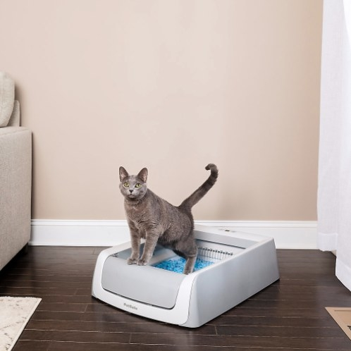 cat in the self cleaning litter box