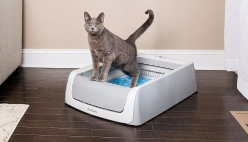 The self cleaning litter box with a cat in it