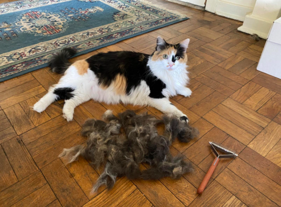 Reviewer's cat next to a large pile of fur and the grooming brush