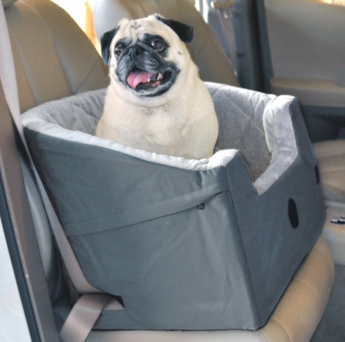 pug sitting in pet bucket booster seat in grey