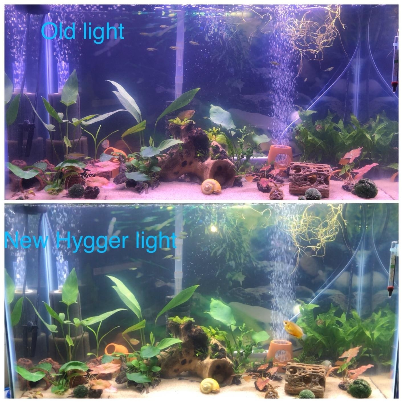 before: tank with darkish lighting after: well lit tank