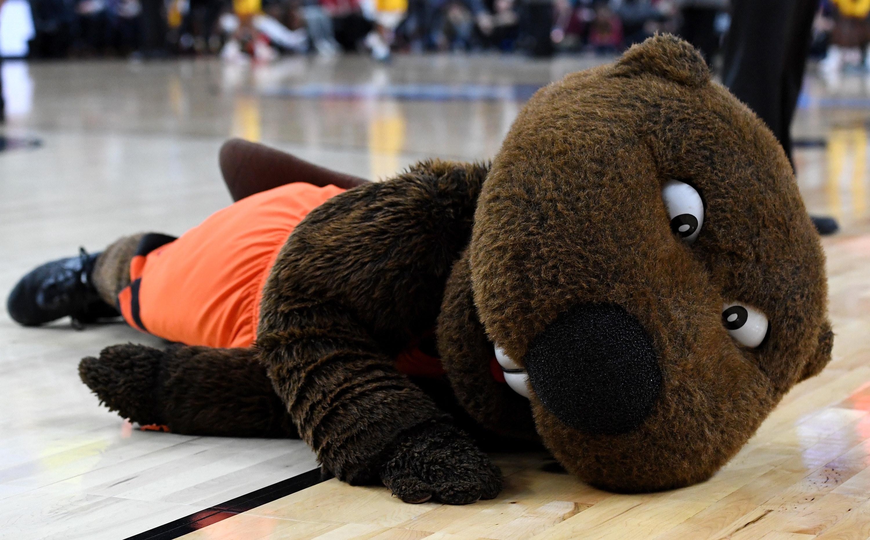 Beaver mascot laying down.