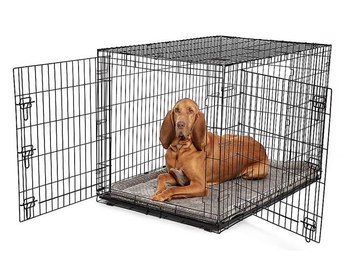 bloodhound in the large black crate