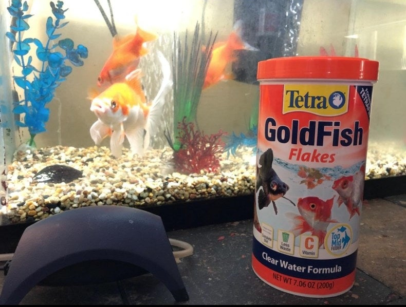 A reviewer's fish tank with goldfish flakes in front of it