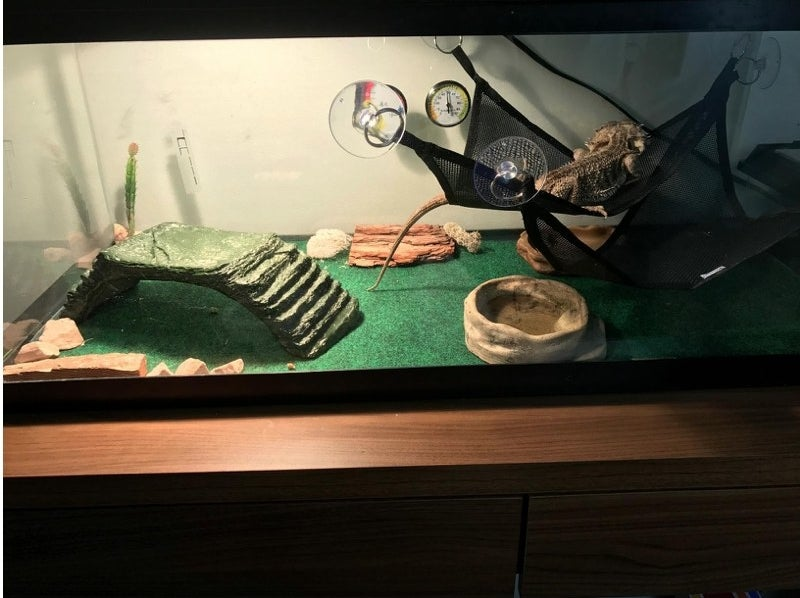 A reviewer's bearded dragon tank lined with the substrate liner