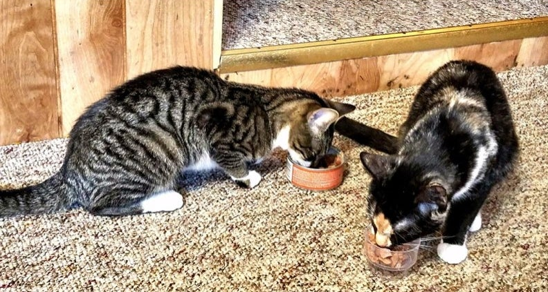 A reviewer's cats enjoying a can of cat food