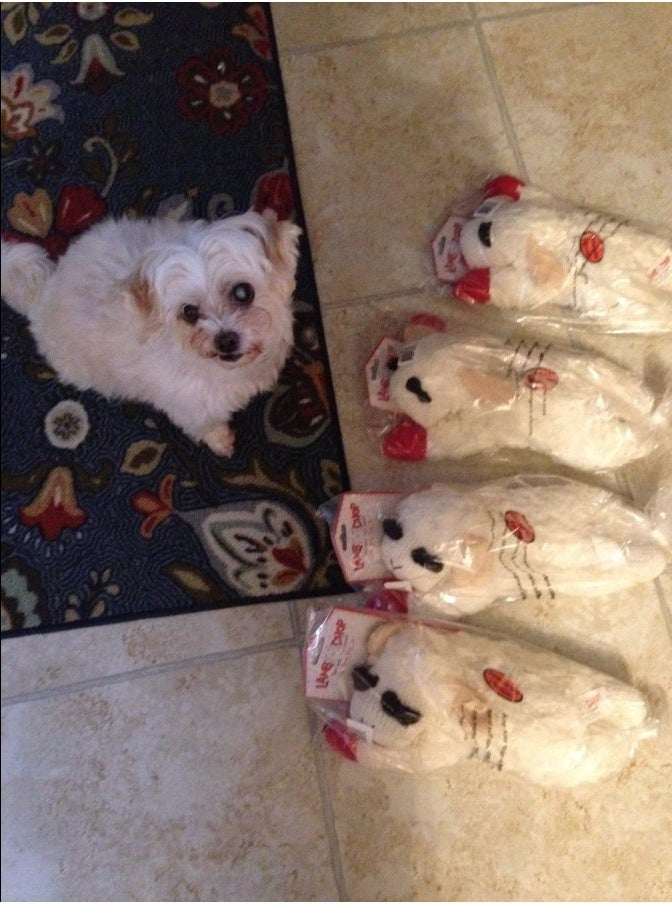 A reviewer's dog surrounded  by lamb plushies