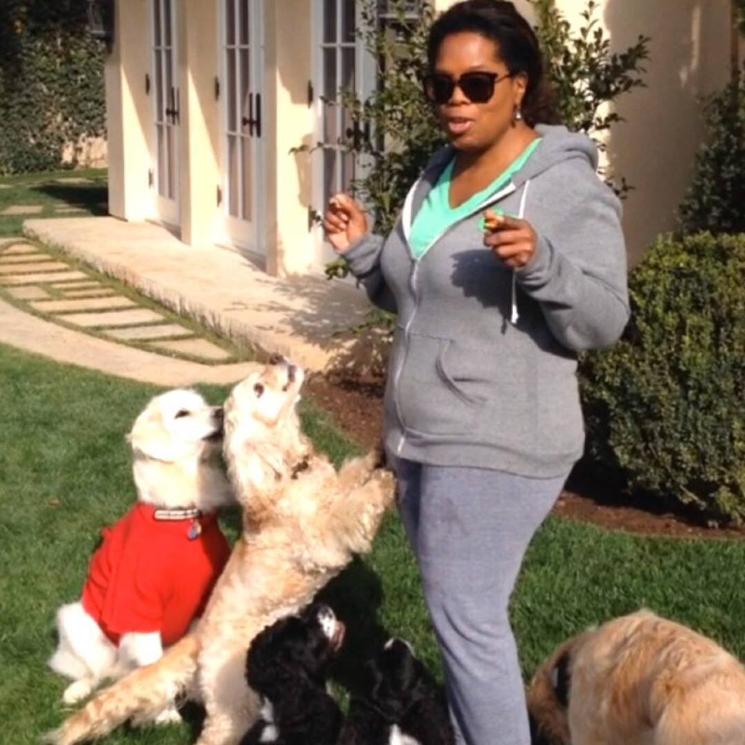Oprah playing with her dogs on her lawn at home