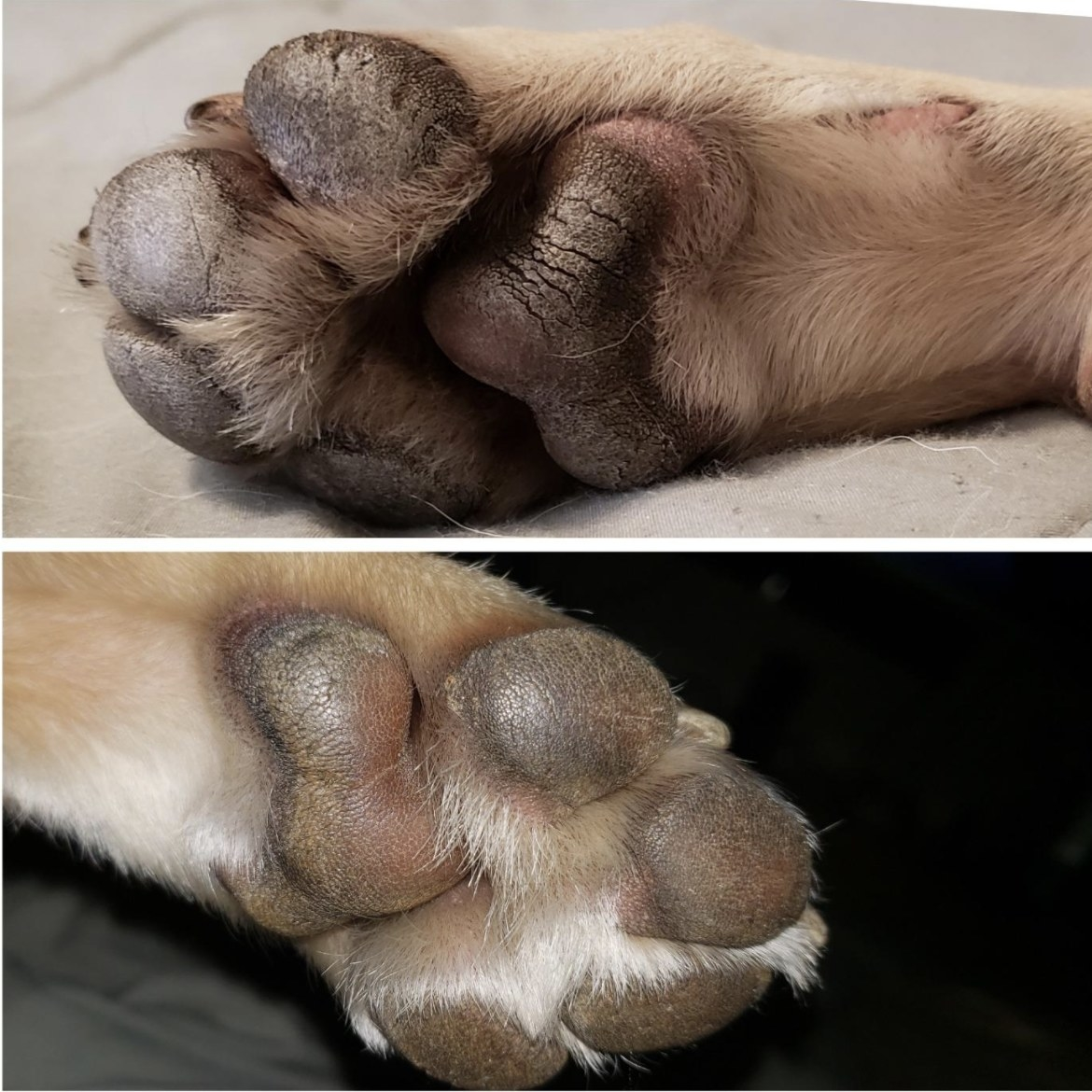 A before and after of a dog's paw