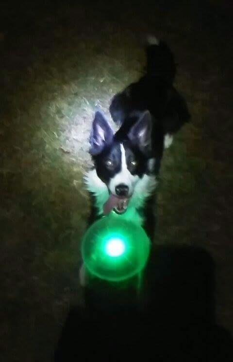 The frisbee, illuminated in green
