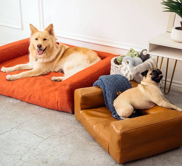 One large dog sitting on a low, square sofa in orange fabric and a small dog sitting on a small faux leather sofa in the same shape