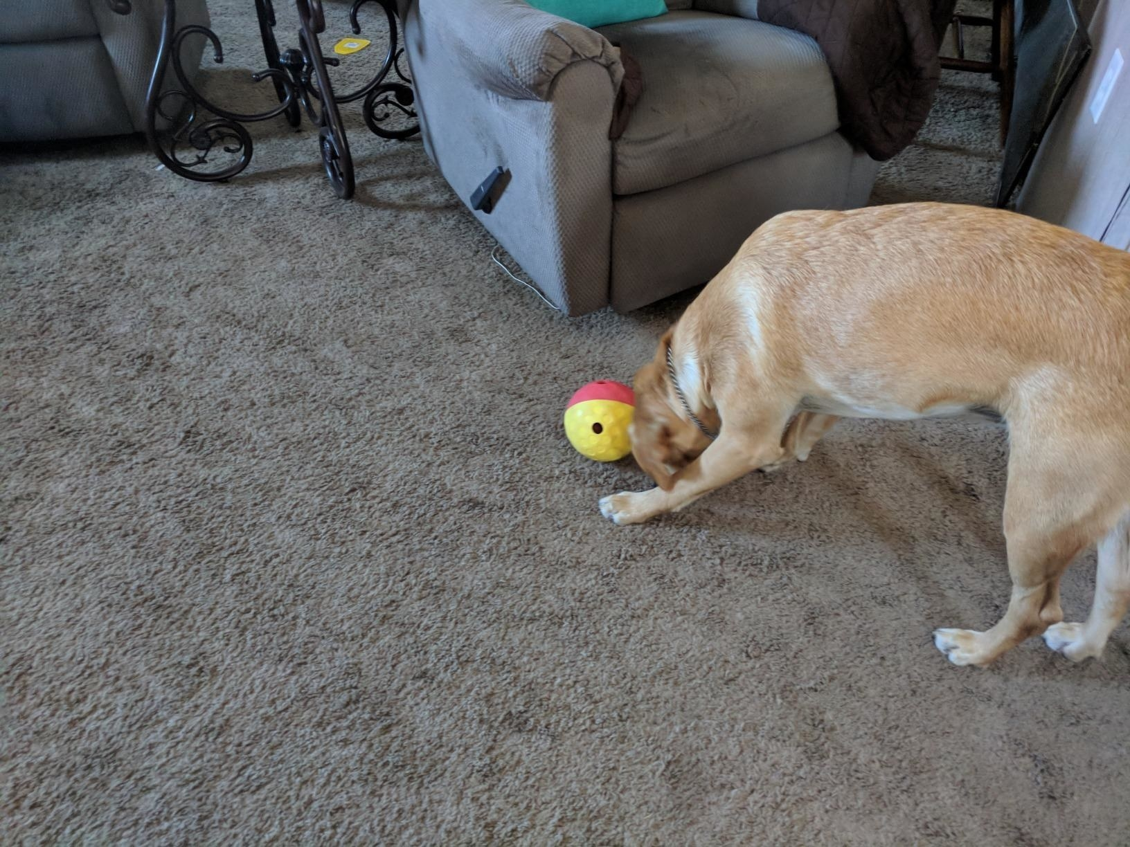 The treat ball, which is red and yellow, and has two small holes to dispense treats as dogs roll it