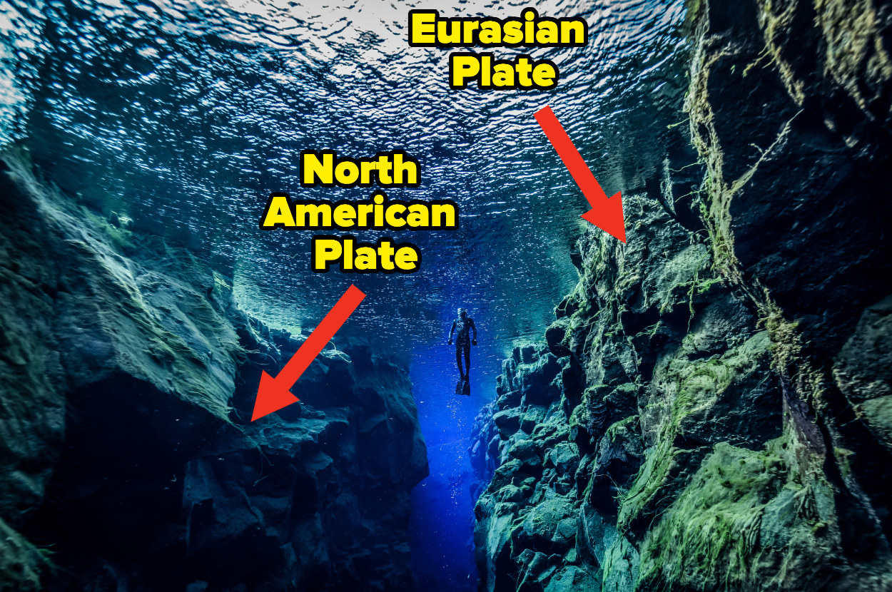 A diver floats between two cliff walls underwater with text describing the left as the North American Plate and the right as the Eurasian Plate