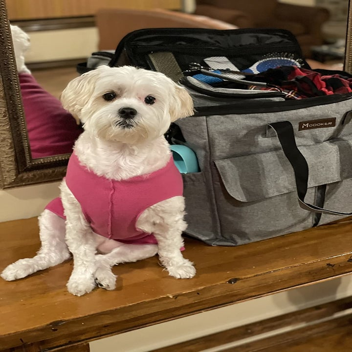 A small dog sits next to the bag, which has side pockets and a zippered mesh compartment in the lid