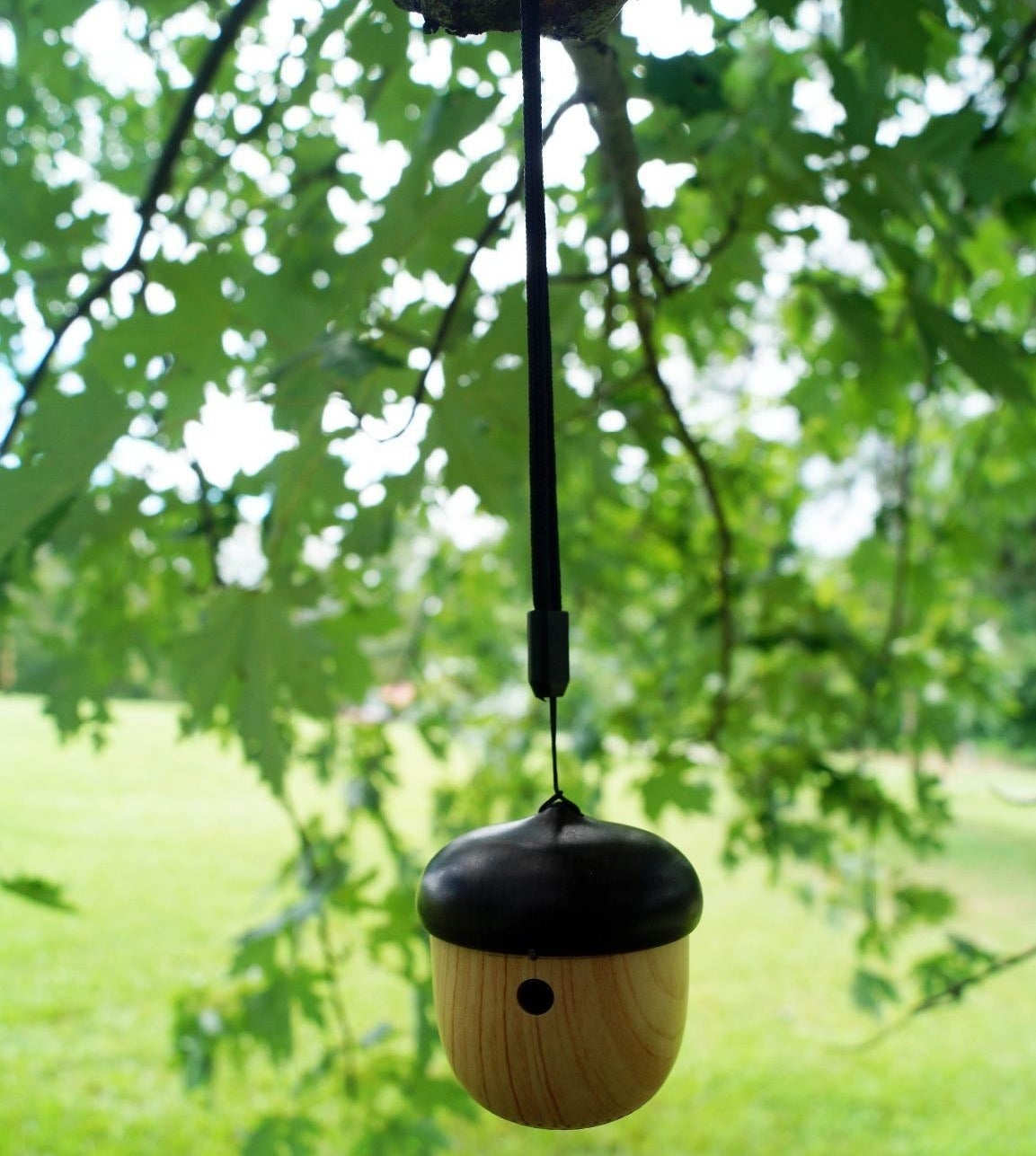 reviewer image of the mini bluetooth nut speaker hanging from a tree