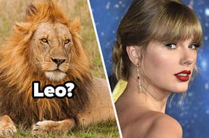 """A fully grown lion lays in a grassy field and Taylor Swift attends the premiere for the movie """"Cats."""""""