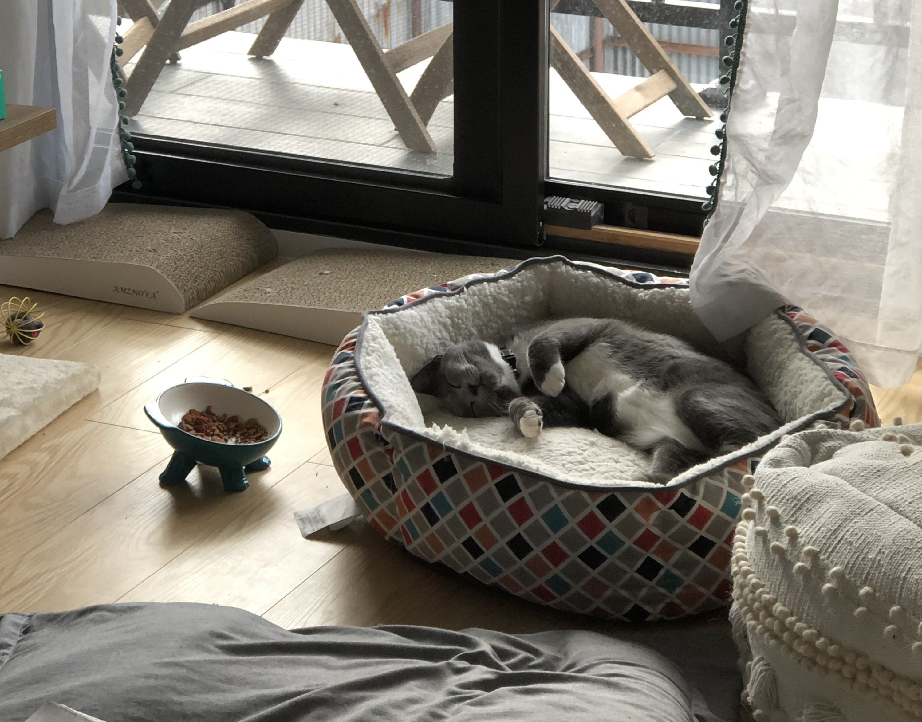 a BuzzFeed editor's cat laying in the geometric bed