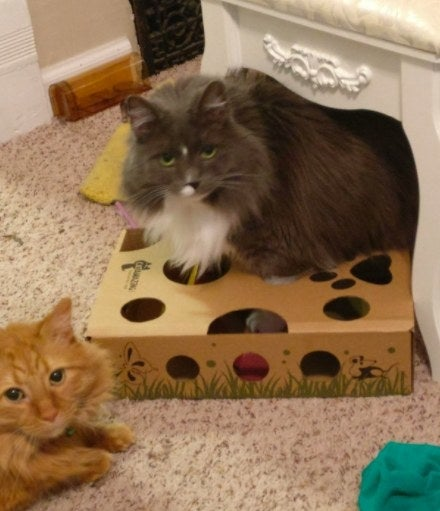 Reviewer's picture of their two cats playing with the puzzle