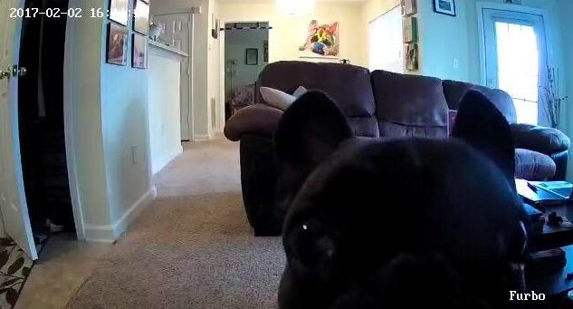 Reviewer's picture of the dog looking into the camera