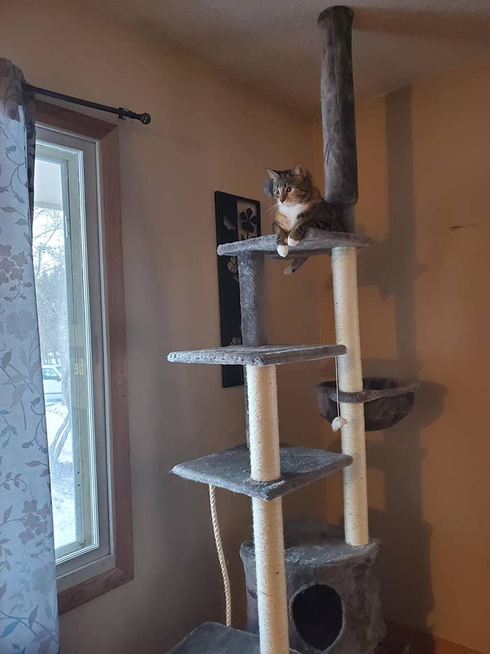 The cat tree, which is covered in gray carpet-like fabric, and has scratching post material wrapped around much of its two main columns, which support four platforms, a hammock, and a cat condo