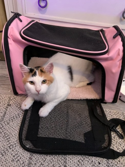 cat sitting in a pink travel carrier