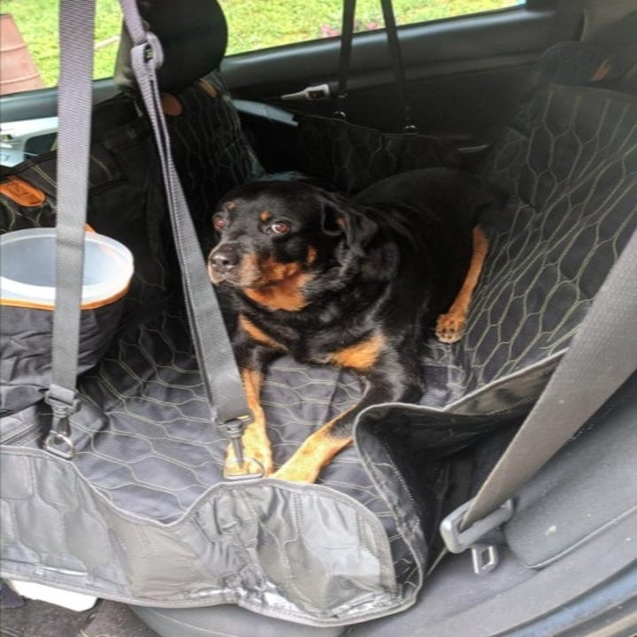 black and brown dog sitting on a quilted black cover in a car