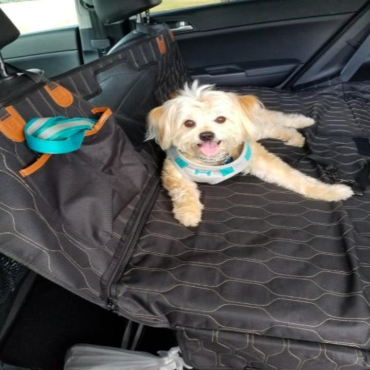 blonde small dog sitting on a quilted black back seat cover
