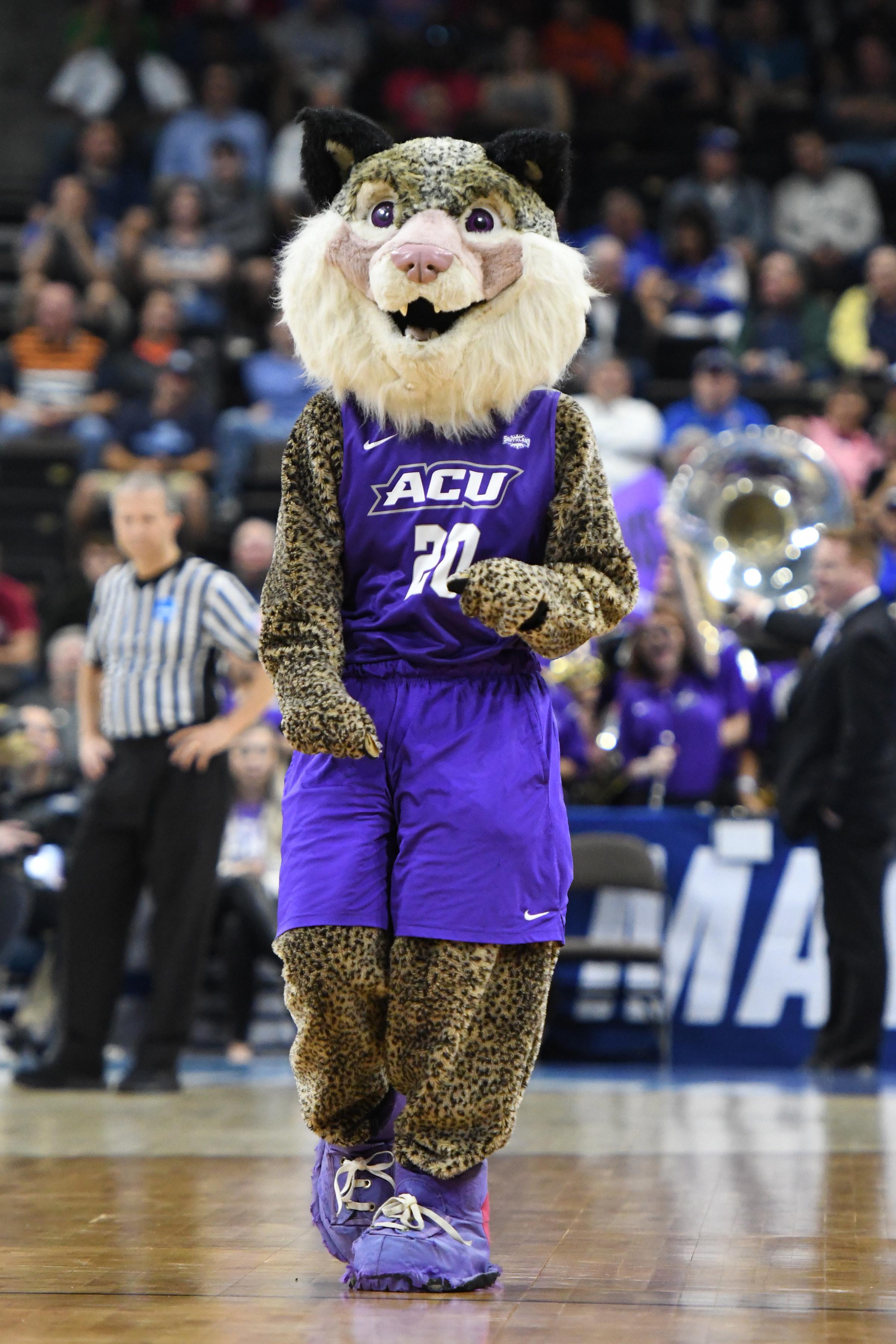 Leopard-spotted wildcat in purple gear.
