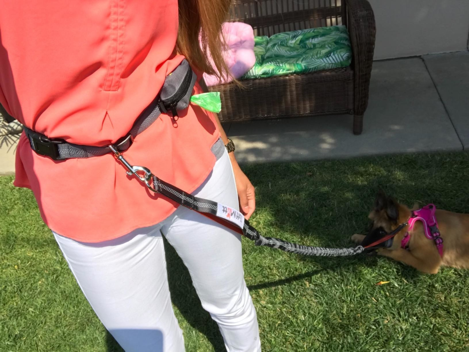 The leash, which wraps around the waist, and then hooks to the dog's leash with a carabiner-style clip