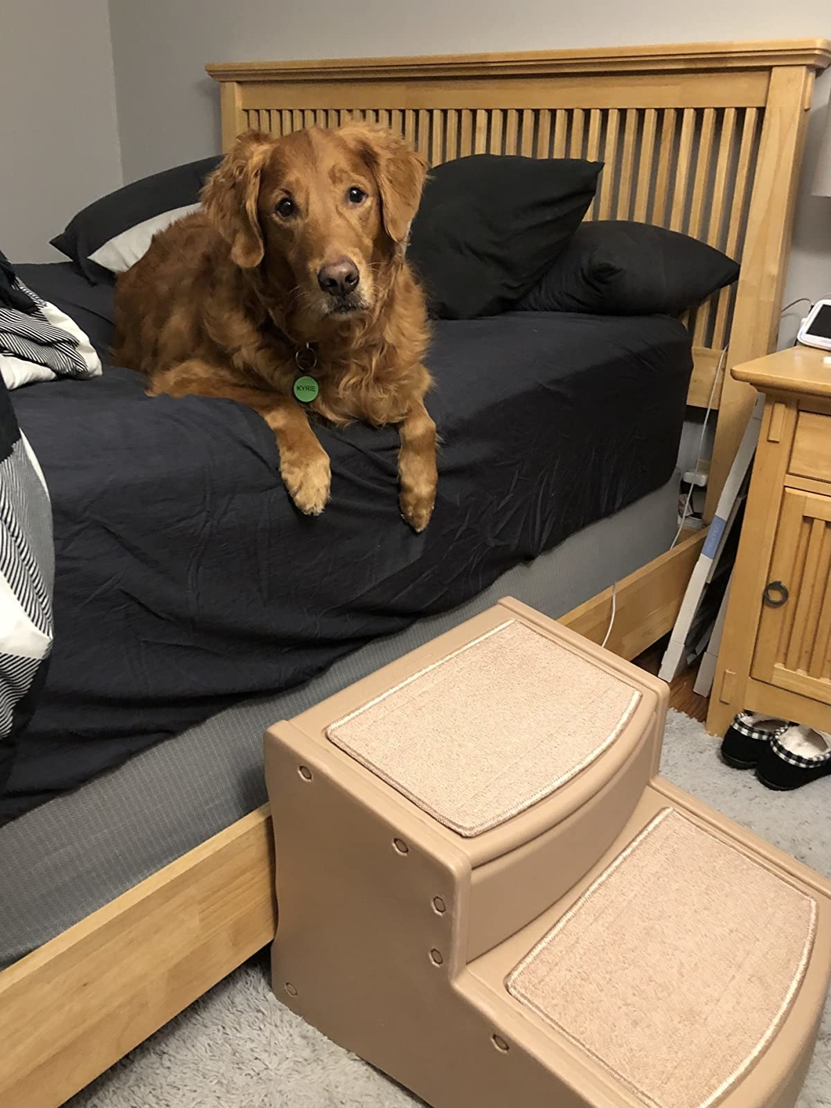 The stairs, which are two large, wide steps, leading up to a bed with a golden retriever on it