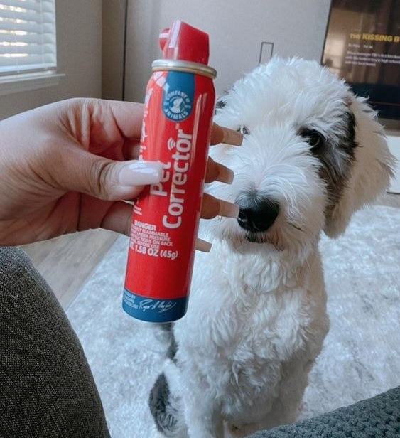 Reviewer's picture of their dog with the air spray