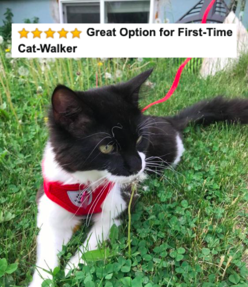 """Reviewer's picture of their cat in the harness with five-star caption """"great option for first-time cat walker"""""""