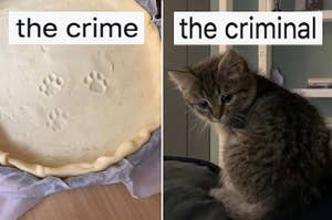 """Paw prints in a pie crust labeled """"the crime"""", and a kitten labeled """"the criminal"""""""