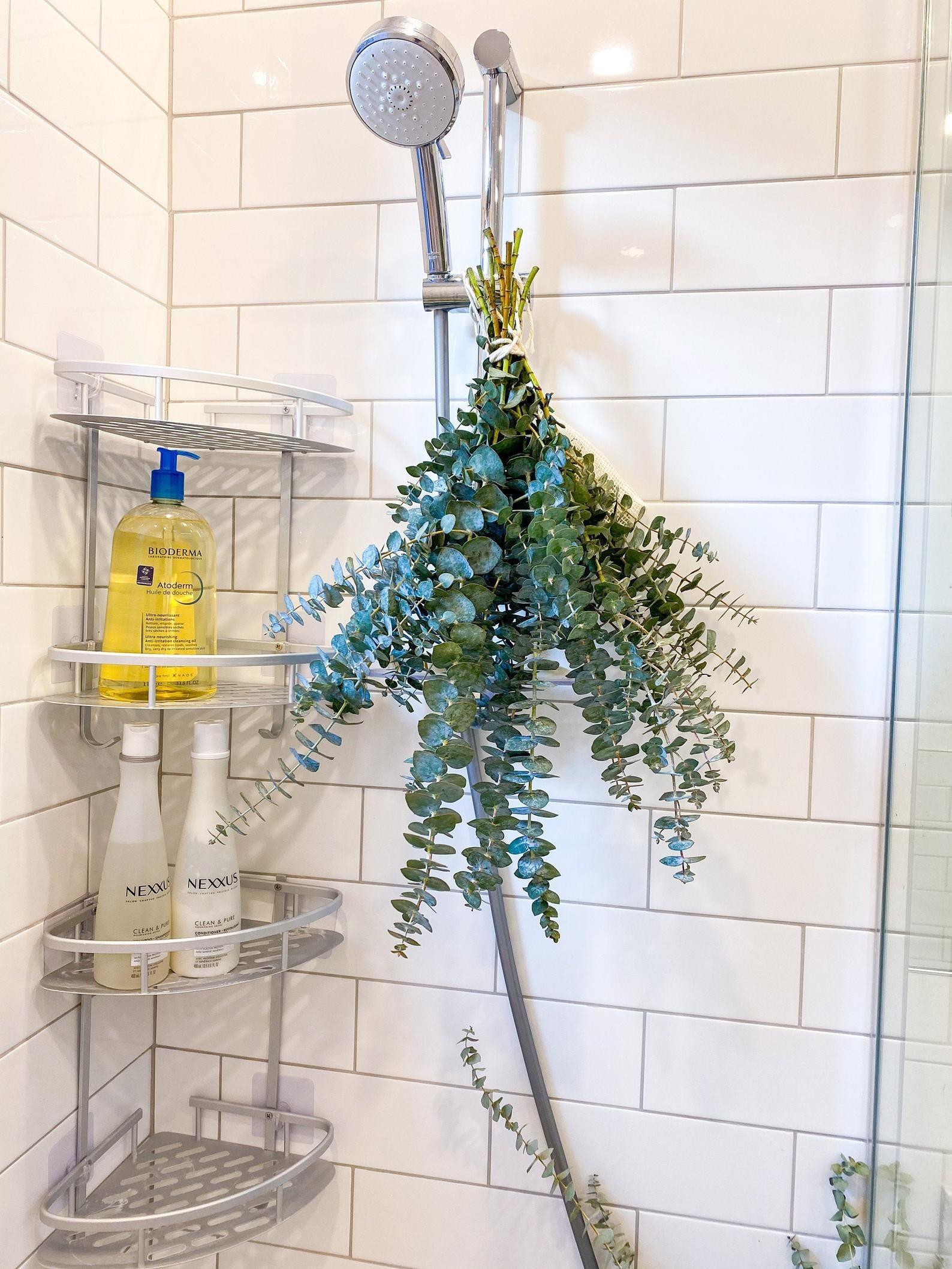 the eucalyptus bundle on a shower