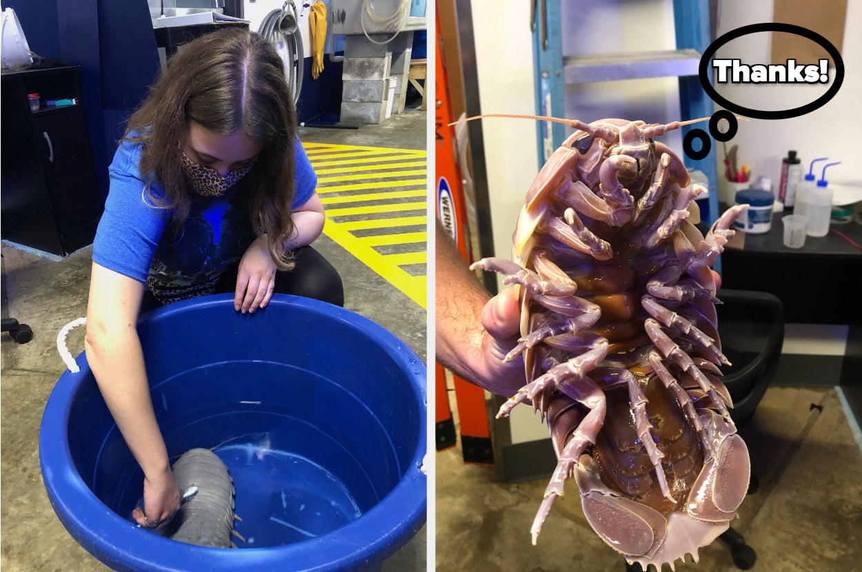 "Woman brushing an isopod, next to an isopod's face and a speech bubble that says ""thanks"""