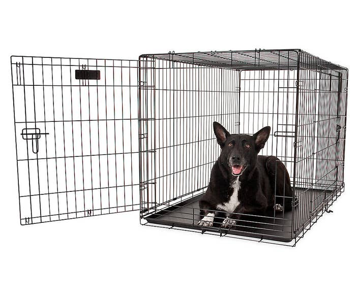 large dog in the crate