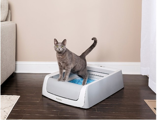 cat in the scoop-free, self-cleaning litter box