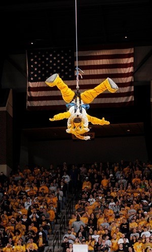 Yellow tiger mascot dangling on a bungee cord.