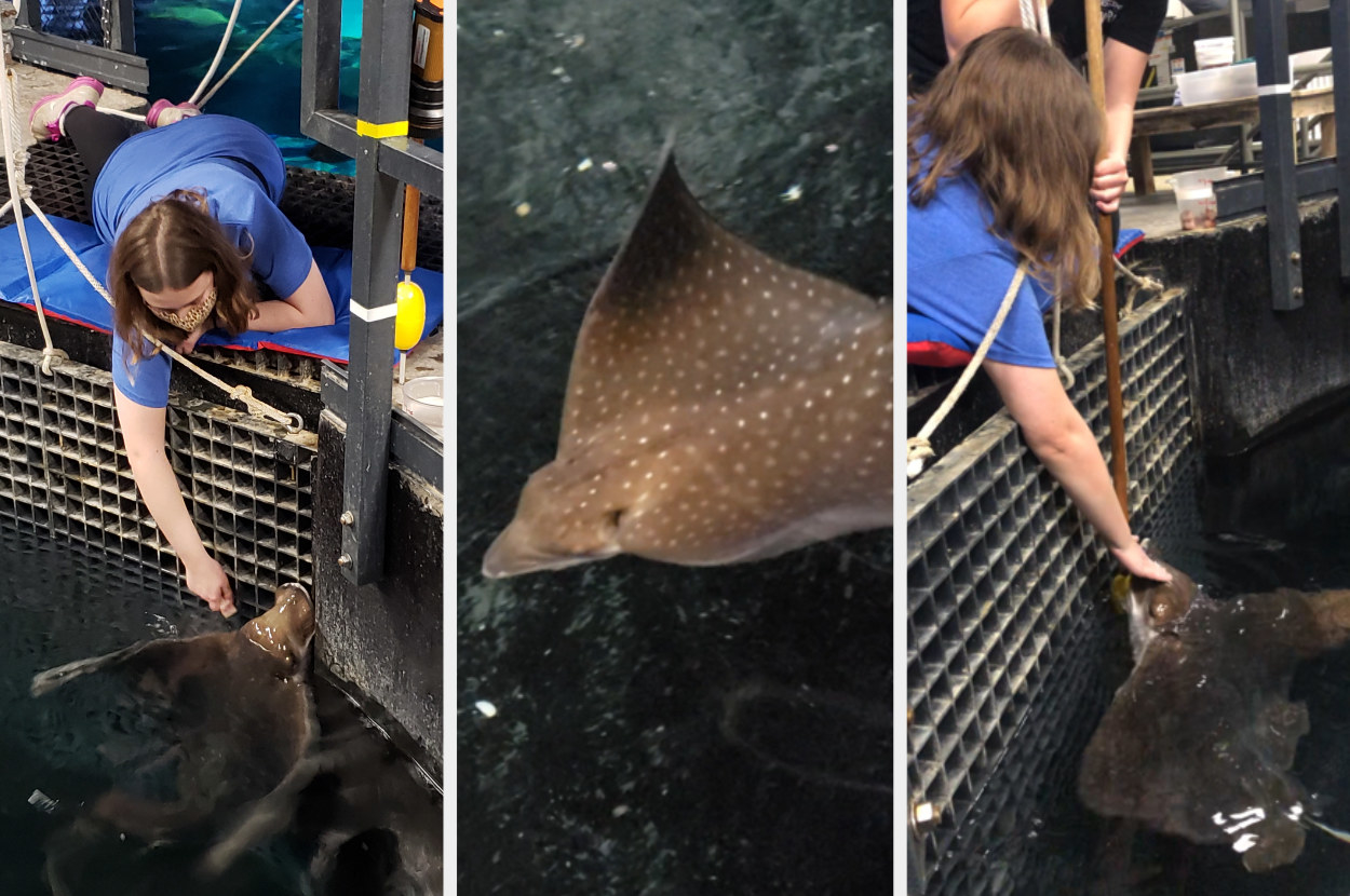Woman feeding a stingray, the ray swimming, then the woman petting the ray's head